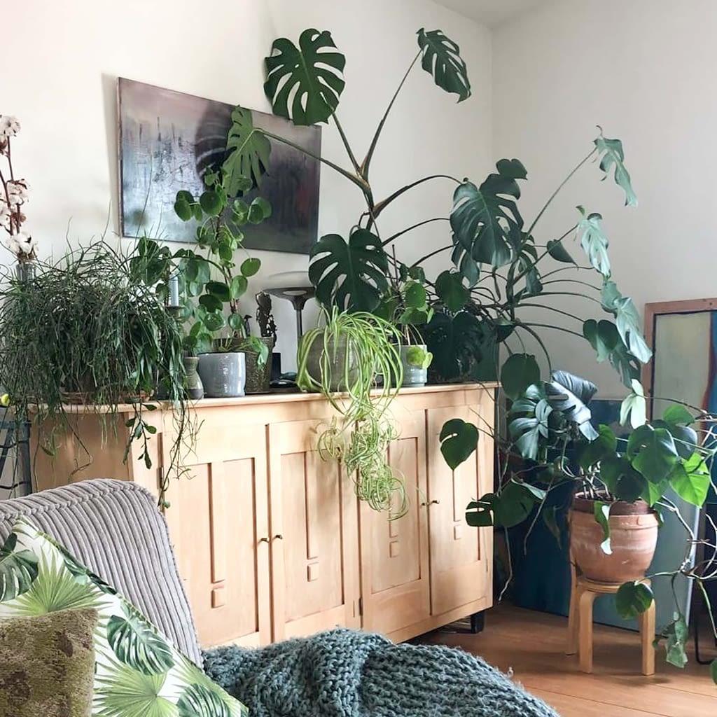 styling met monstera planten